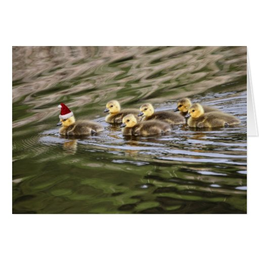 Merry Christmas Baby Geese Stationery Note Card
