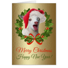 Merry Christmas Baby Nigerian Dwarf Goat Kid Card