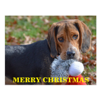 Merry Christmas Beagle With Santa Hat Postcard