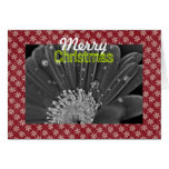 """""""Merry Christmas"""" Black and White Daisy Greeting Greeting Cards"""