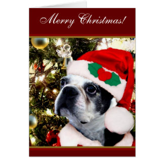 Merry Christmas Boston terrier Card