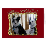 Merry Christmas Boston Terrier dogs Cards
