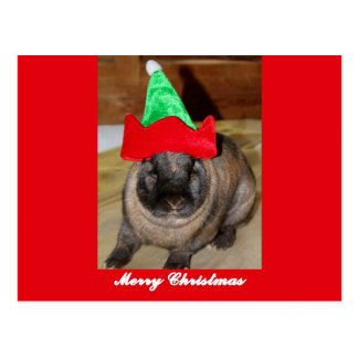 Merry Christmas Bunny With Holiday Rabbit Hat Gift Postcard