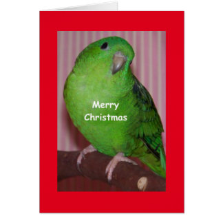 merry christmas card from parrots
