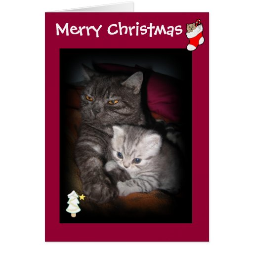 Merry Christmas - Cat greeting card