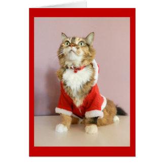 Merry Christmas cat santa puss Greeting Card