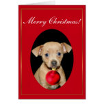 Merry Christmas Chihuahua puppy greeting card