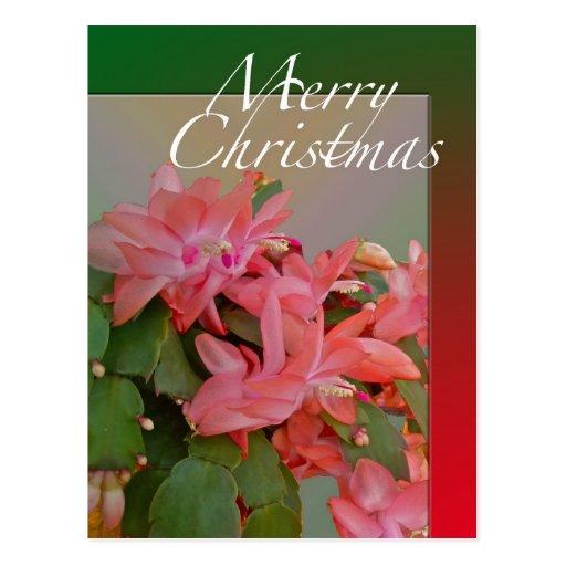 Merry Christmas Christmas Cactus Flowers Postcards