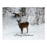 Merry Christmas Deer Post Cards