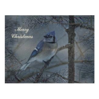 Merry Christmas - Eastern Blue Jay Postcard
