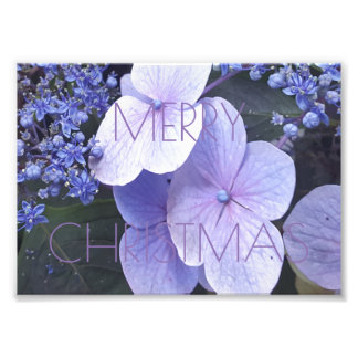 Merry Christmas Floral Purple Flowers Photography Photo Print