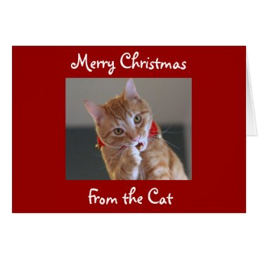 Christmas Themed Merry Christmas From the Cat Card