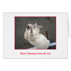 Merry Christmas from the Cat Card at Zazzle