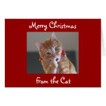 Merry Christmas From the Cat Cards