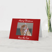 Merry Christmas From the Cat Holiday Card