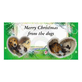 Merry Christmas from the dogs Photo Greeting Card
