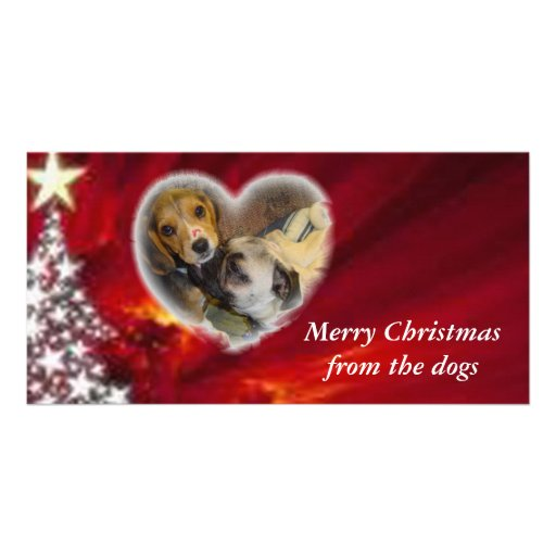 Merry Christmas from the dogs Custom Photo Card