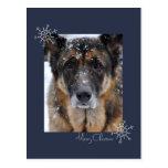 Merry Christmas German Shepherd in Snow Postcard