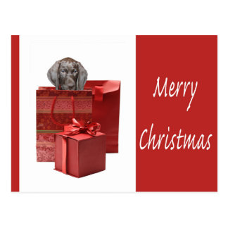 Merry Christmas german shorthaired pointer Post Card
