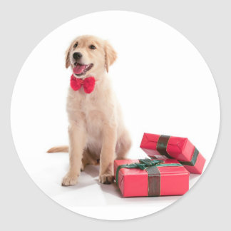 Merry Christmas Golden Retriever Puppy Classic Round Sticker
