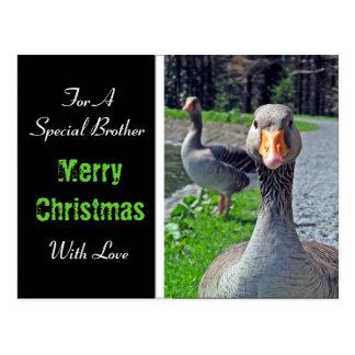 Merry Christmas - Greylag Geese Postcard