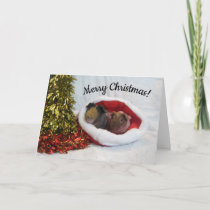 Merry Christmas Guinea Pig Card