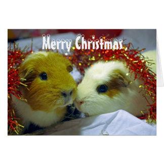Merry Christmas Guinea pig card