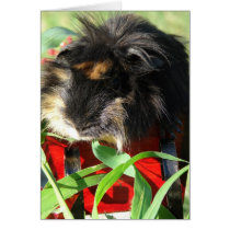 Merry Christmas!  Guinea Pig Card