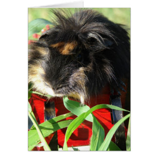 Merry Christmas!  Guinea Pig Card