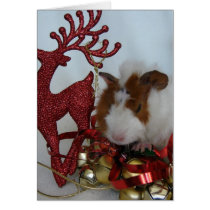 Merry Christmas!  Guinea Pig with reindeer Card