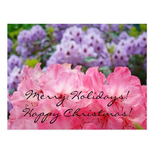 Merry Christmas! Happy Holidays! post cards Rhodie