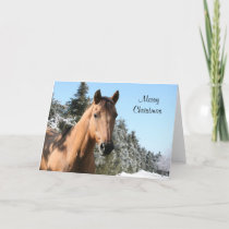 Merry Christmas horse Holiday Card