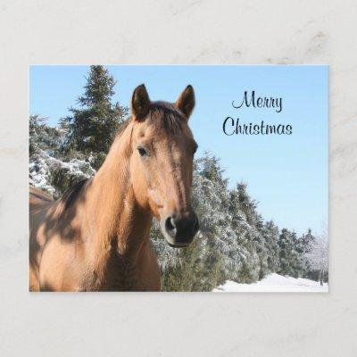 MERRY CHRISTMAS HORSE
