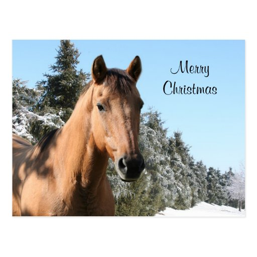merry christmas images with horses merry christmas postcard zazzle
