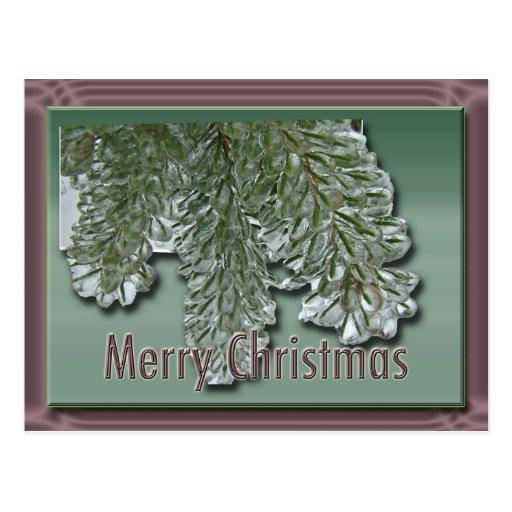 Merry Christmas Iced Arborvitae Postcards