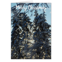 Merry Christmas Icy Spruces Card