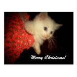 Merry Christmas! Kitten Postcard
