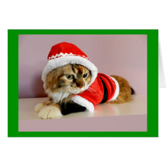 Merry Christmas kitty cat Santa suit Greeting Card