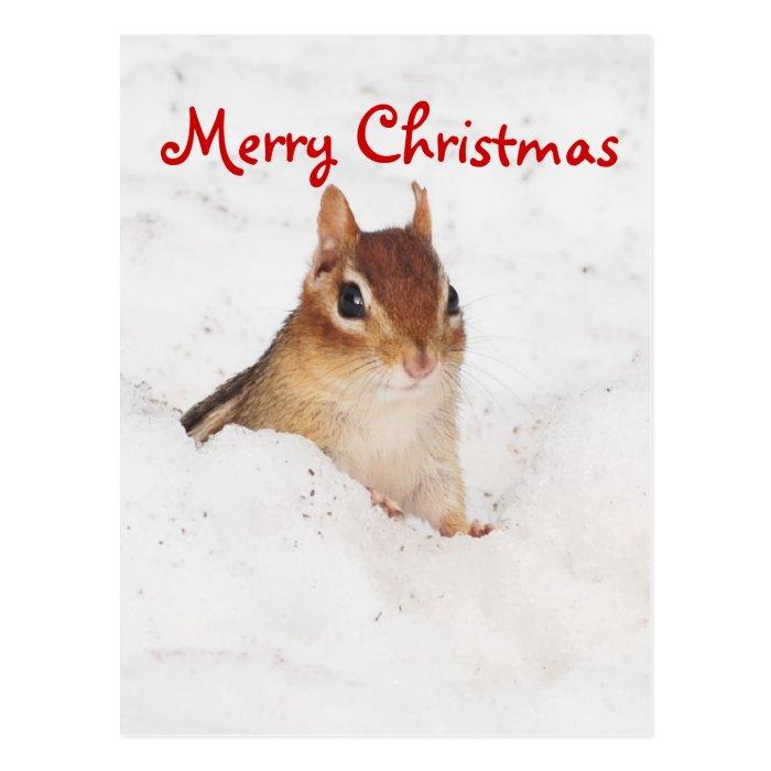 Merry Christmas Little Snowy Chipmunk Postcard
