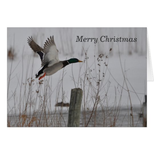 Merry Christmas Mallard Duck Card by Janz