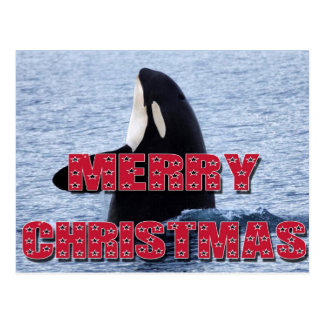 Merry Christmas Orca Whale Spy Hop Holiday Gifts Postcard