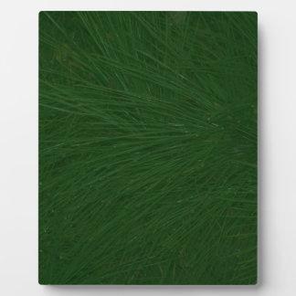 Merry Christmas Pine Tree Close Up Plaque