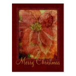 Merry Christmas Poinsettia Postcard