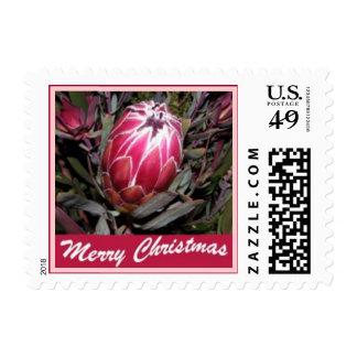 Merry Christmas Protea Flower Postage Stamp (SMALL