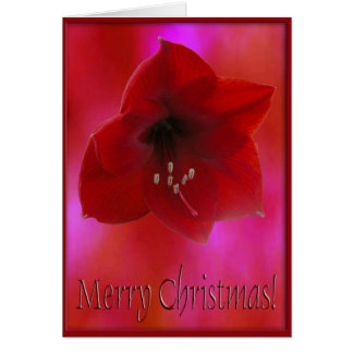 Merry Christmas/ Red Amarilla Card