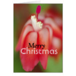 """""""Merry Christmas"""" Red Christmas Flower Greeting Cards"""