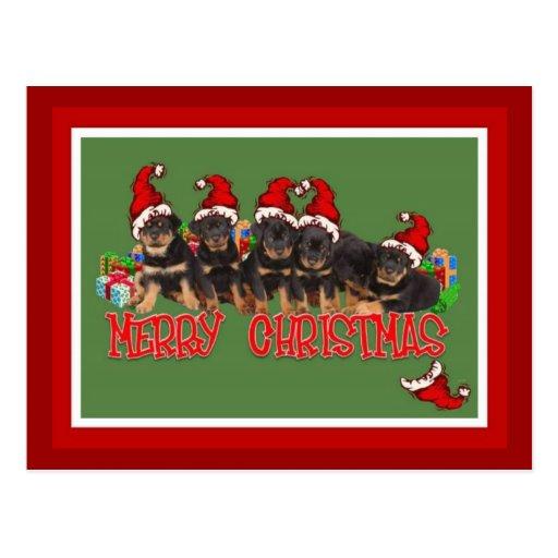 Rottweiler Christmas Cards