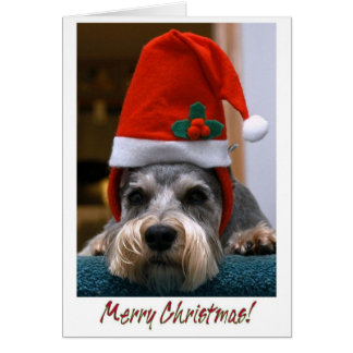 Merry Christmas Schnauzer Card