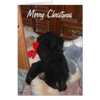 Merry Christmas - Shenandoah Bright Card