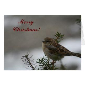 Merry Christmas Sparrow! Greeting Card
